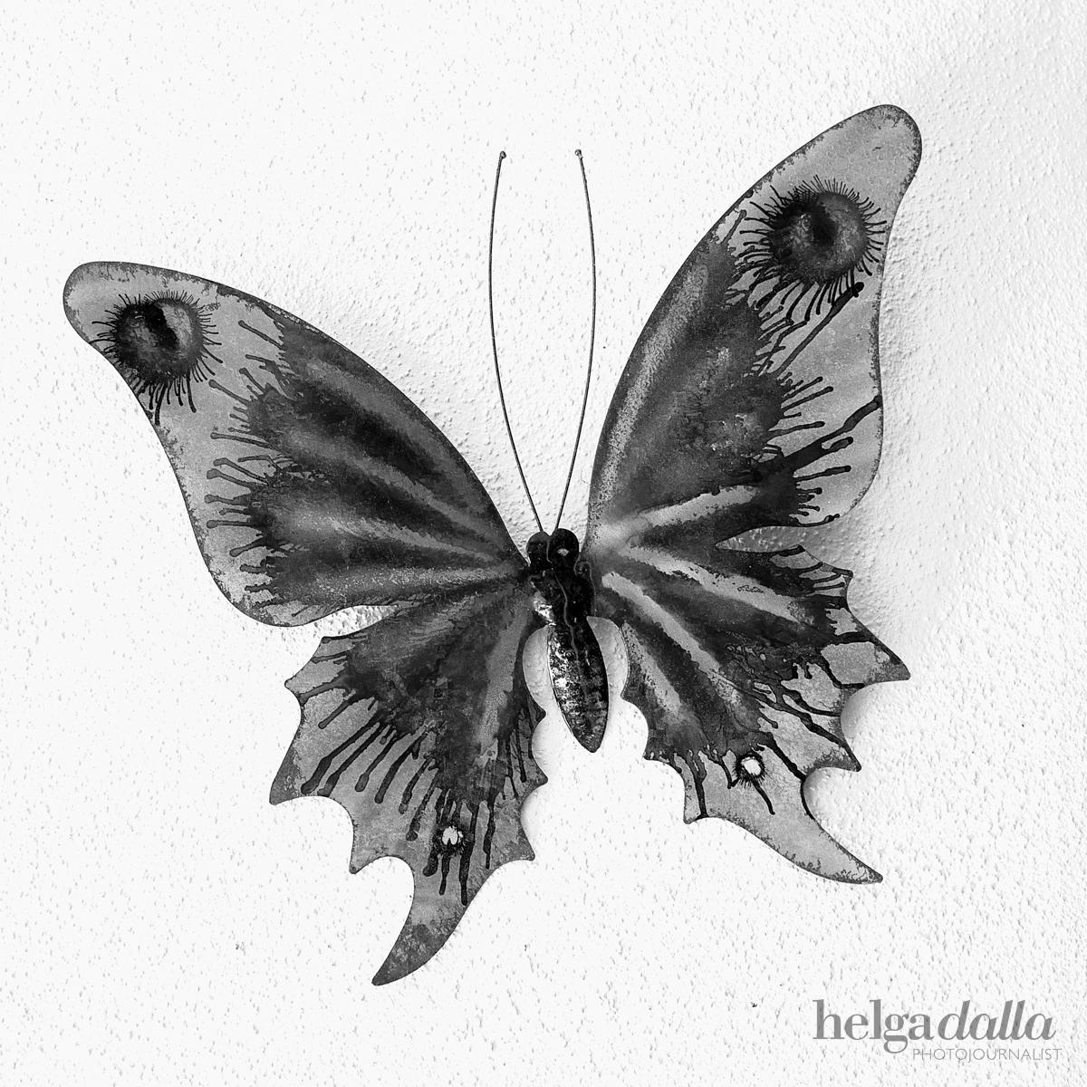 160528 - Butterfly-1 WM